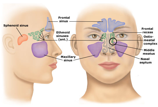 Maxillary sinus cancer
