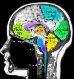 Brain Tumor Resources