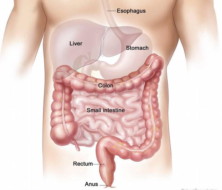 colon and rectal anatomy