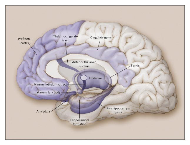 Brain Anatomy And Images Brain