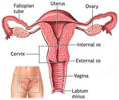 fallopian tube cancer, Human body