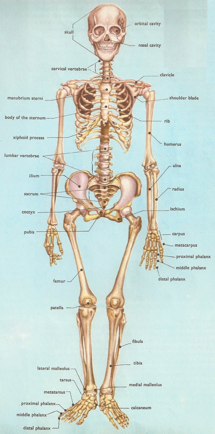 Bone Metastases Images and Xrays