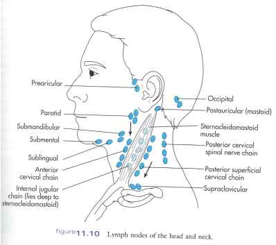 Head Neck Lymph Nodes