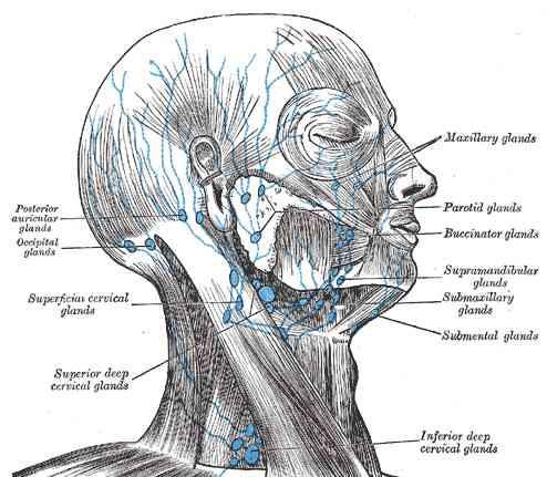 Parotid and Salivary Gland Cancer