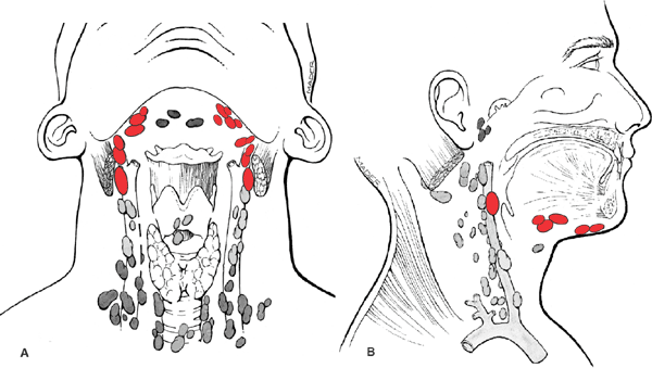 Oral Cavity Lymph Nodes