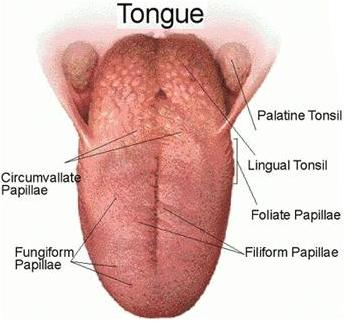 Oral Tongue Cancer And Radiation